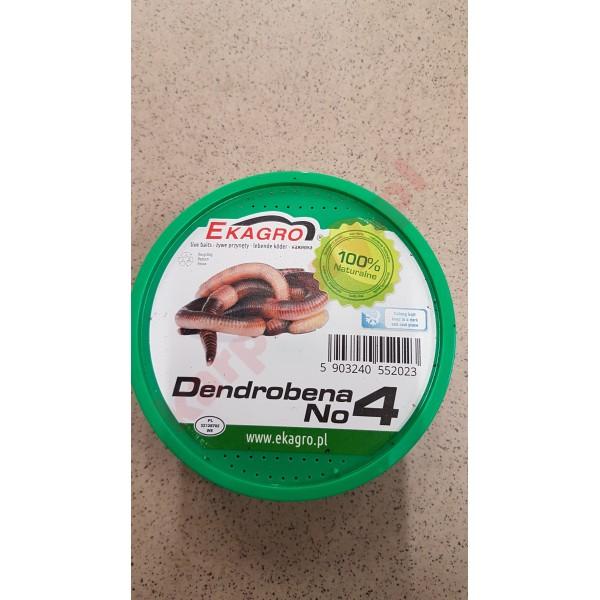 Dendrobena rozmiar 4